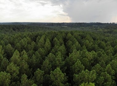 Investment Land for Sale SC