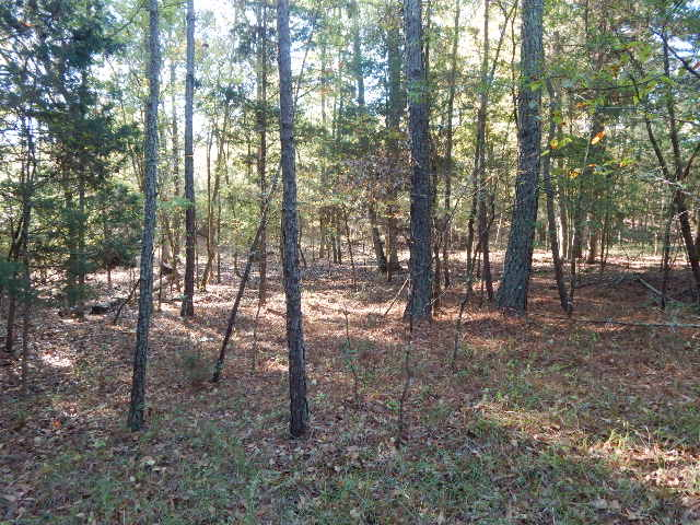 Hunting Land for sale in SC - Gault Land Co.