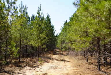 SC Land for Sale