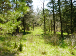 whitmire-sc-land-for-sale-10