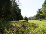 whitmire-sc-land-for-sale-15