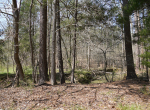 whitmire-sc-land-for-sale-18