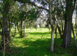 whitmire-sc-land-for-sale-2