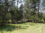 whitmire-sc-land-for-sale-23