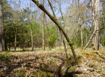 whitmire-sc-land-for-sale-33