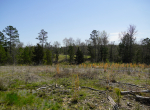 whitmire-sc-land-for-sale-4