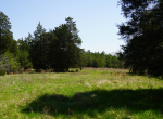 whitmire-sc-land-for-sale-9